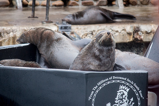 Cape Town Hout Bay Seal Watching
