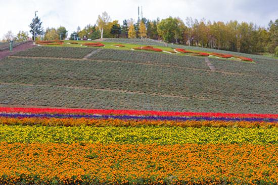 Hokkaido Autumn Guide Furano flowers