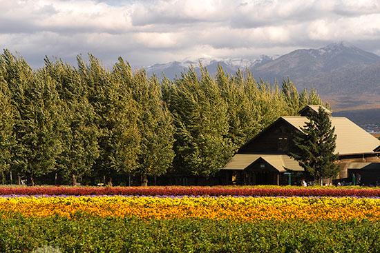 Hokkaido Autumn Guide Furano Farm Tomita Flowers