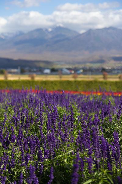 Hokkaido Autumn Guide Furano Farm Tomita Lavender