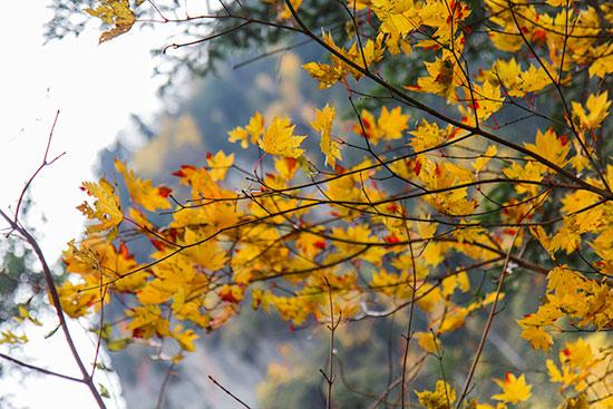 Hokkaido Autumn Guide Autumn Colours
