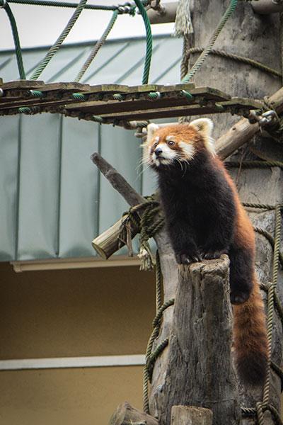 Hokkaido Autumn Guide Asahiyama Zoo