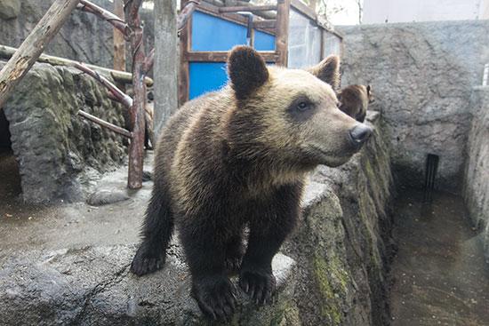 Hokkaido Autumn Guide Noboribetsu Bear Park