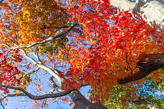 Hokkaido Autumn Guide Hakodate Fort Goryokaku