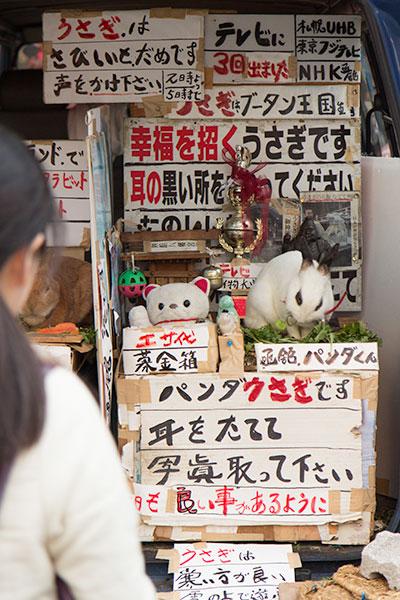 Hokkaido Autumn Guide Hakodate Panda Rabbit
