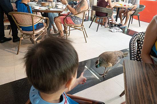 Sofitel Sentosa Resort & Spa Peacocks